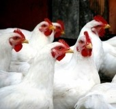 Improved Services at Highbury Poultry